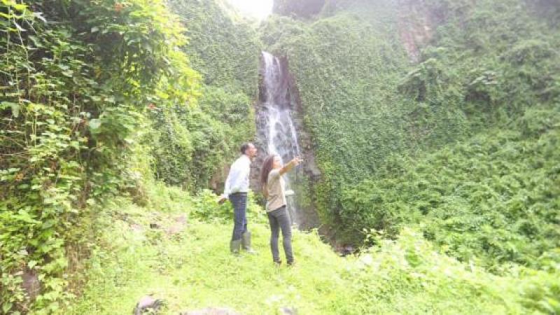 Le Parc Naturel Régional de la Martinique va restaurer l'ancien Jardin des Plantes de Saint-Pierre