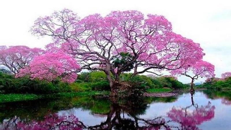 Parc Naturel de Martinique : fin de la grève des 11 agents sur...149