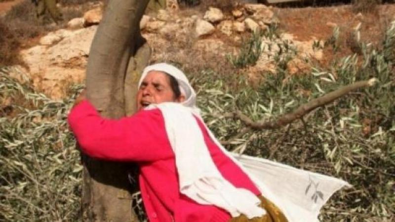 Qui arrêtera les bulldozers israéliens ?