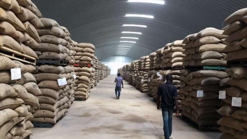 Cacao : le Ghana et la Côte d'Ivoire adoptent un nouveau mécanisme de fixation des prix