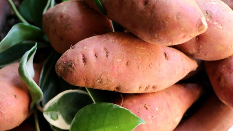 """Henry Joseph : """"La patate douce a démontré ses vertus santé"""""""