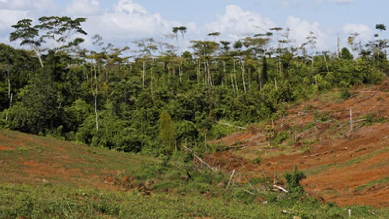 La Cour internationale de justice reconnaît le droit à réparation des dommages à l'environnement