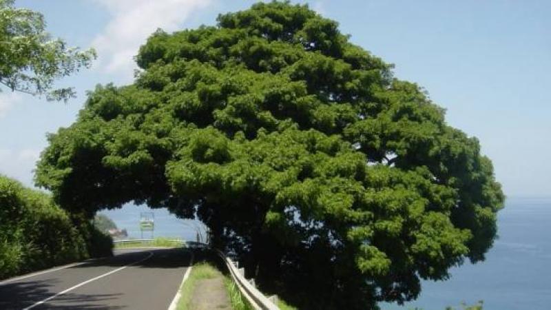 La Martinique, île où les DGS n'ont pas d'obligation de réserve
