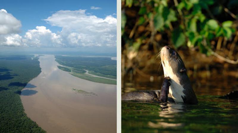 ARCHIVES : A PROPOS DE L'INTERNATIONALISATION DE L'AMAZONIE
