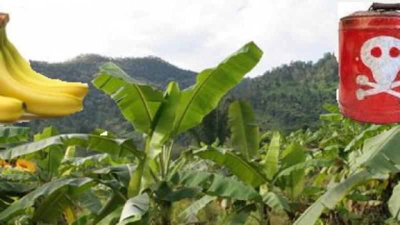 La Martinique empoisonnée au chlordécone dans l'indifférence de l'état!