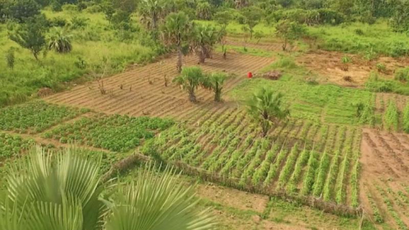 COP 22 : L'AFRIQUE VISE L'INDEPENDANCE ALIMENTAIRE GRACE A SA PAYSANNERIE