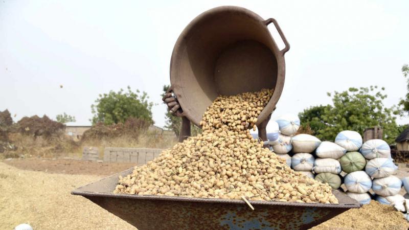 Au Sénégal, la guerre de l'arachide fait rage entre les exportateurs chinois et les huiliers locaux