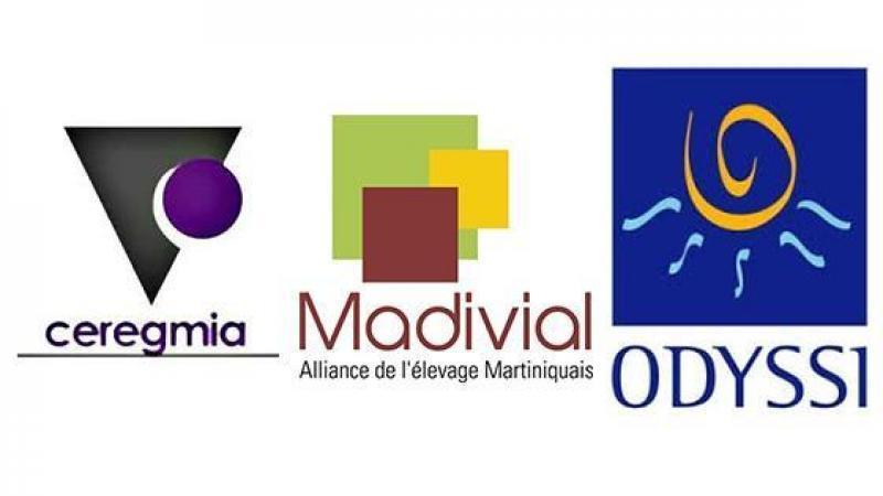 Madivial, Ceregmia and Co : à pleines dents dans le fromage des fonds européens