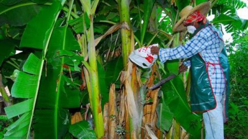 La voix des ouvriers agricoles doit être entendue!