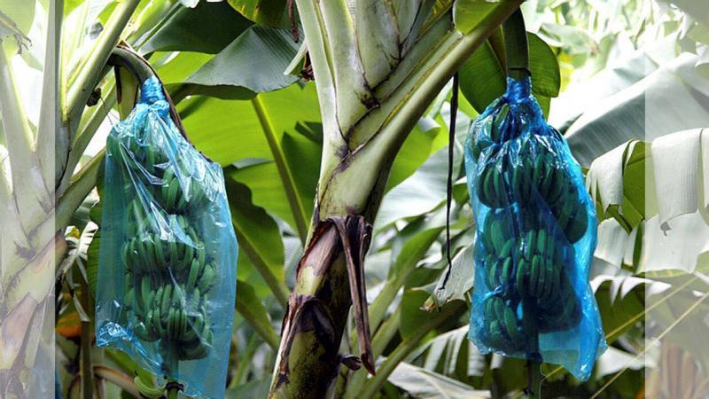 Chlordécone aux Antilles : de la caractérisation de la contamination alimentaire à l'imprégnation des individus. Résultats de l'étude Kannari 2013-2014