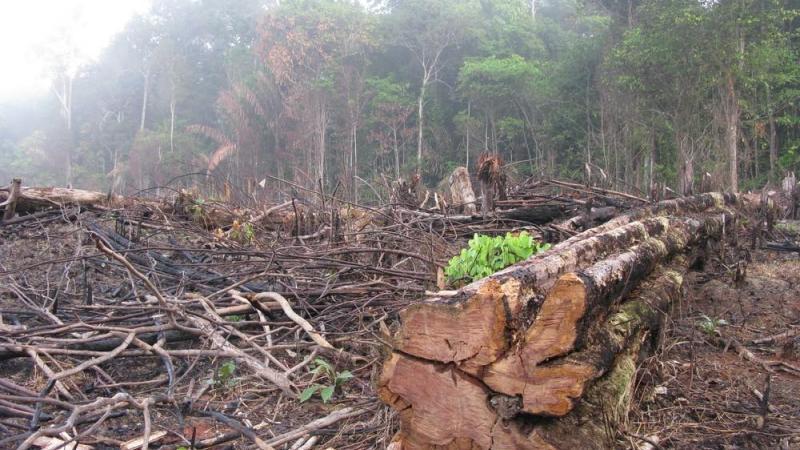 La deforestación de la selva amazónica alcanza su nivel más alto en 10 años