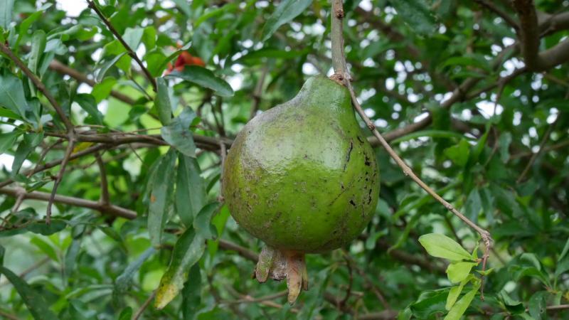 Martinique : un marché public au coeur d'une enquête