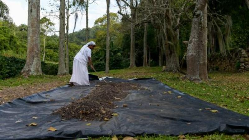 "TOURISTS VISIT PLANTATION IN BRAZIL AND ARE SERVED BY BLACK ""SLAVES"""