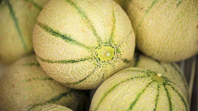 Le melon de Guadeloupe et Martinique menacé par la baisse du trafic aérien