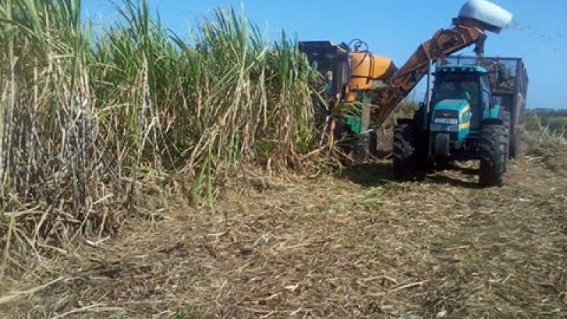 10 hectares plantées en canne vont être bétonnées au Saint-Esprit