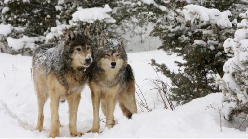 """Conférence de presse des loups solitaires : """"Arrêtez de nous comparer aux assassins caucasiens !"""""""