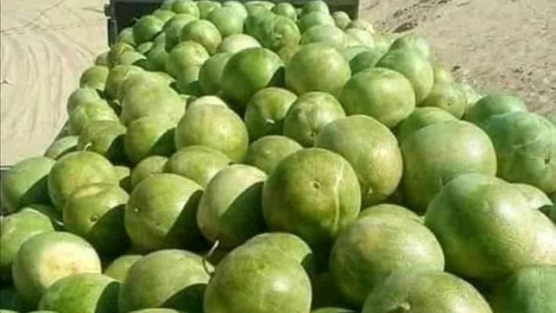 Oued Souf, le nouvel eldorado agricole de l'Algérie