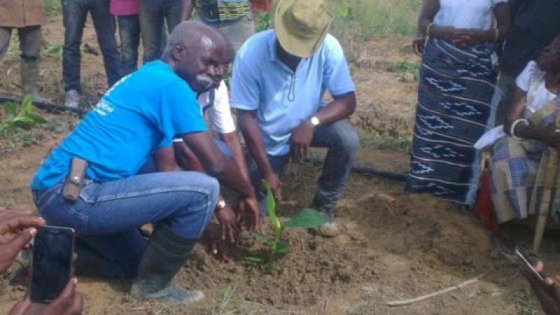 TIASSALE/DEVELOPPEMENT AGRICOLE : UN GROUPE IVOIRO-ANTILLAIS S'INSTALLE