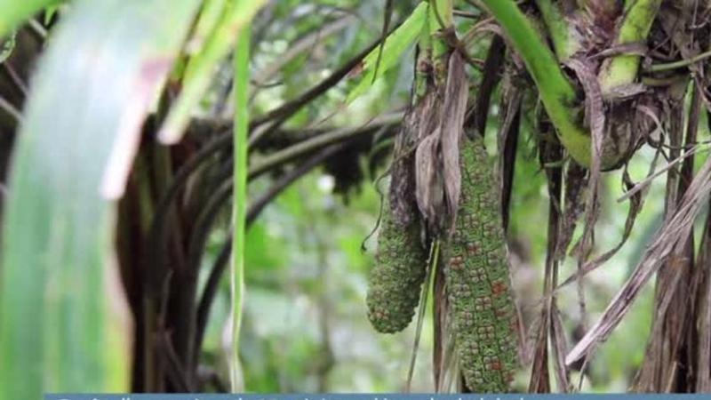 Forêt d'exception : la Martinique décroche le label