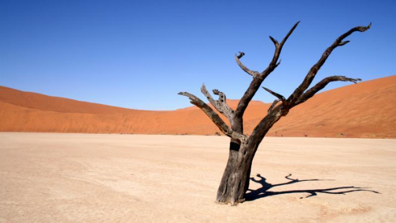 37°C en Norvège, 41°C au Japon, 51°C en Algérie… 2018 fait tomber tous les records planétaires
