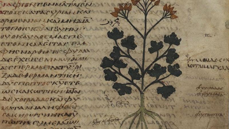 Dans l'Antiquité, regards sur la première espèce végétale éteinte par l'homme