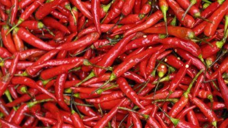 Maroc : la filière piment rouge a généré plus de 118 millions d'euros en 2019, un record