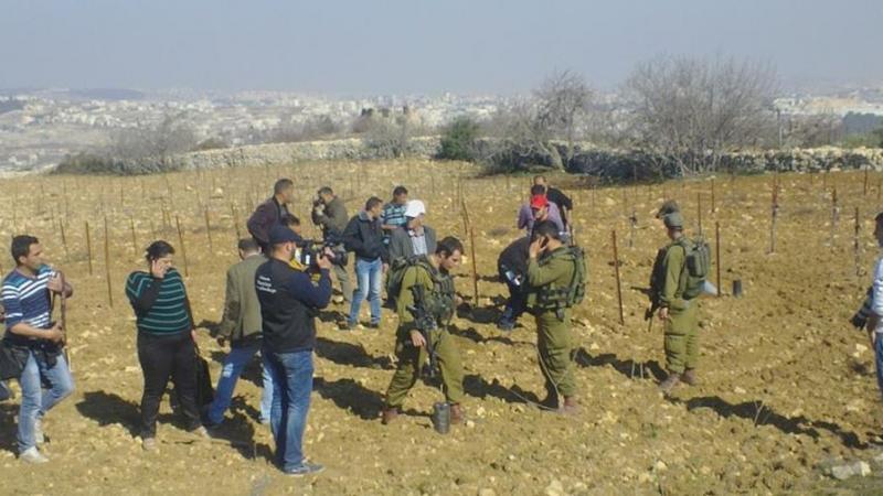 400 oliviers déracinés à l'ouest de Bethléem