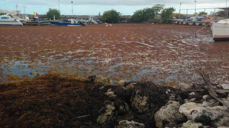 Un rapport s'alarme de « la dégradation généralisée » des masses d'eau en Guadeloupe