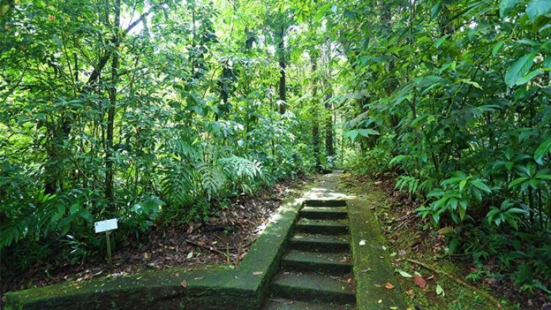 Parc Naturel de Martinique (PNM) : acteur de la préservation et de la valorisation des patrimoines martiniquais