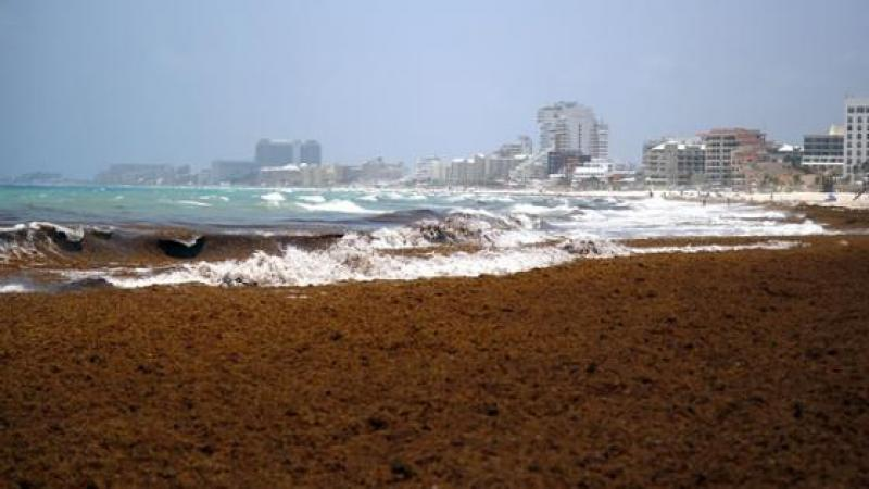 Caribbean-bound tourists cancel holidays due to foul-smelling seaweed