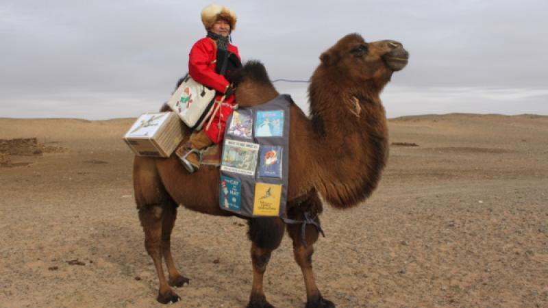 Mongolie. Le chameau qui parcourt le désert de Gobi pour apporter des livres aux enfants