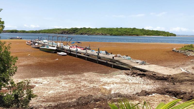 Mesures de gestion pour les populations antillaises exposées à la décomposition d'algues Sargasses