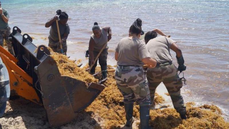 C'est le RSMA-Martinique qui a nettoyé les plages de Saint-Anne