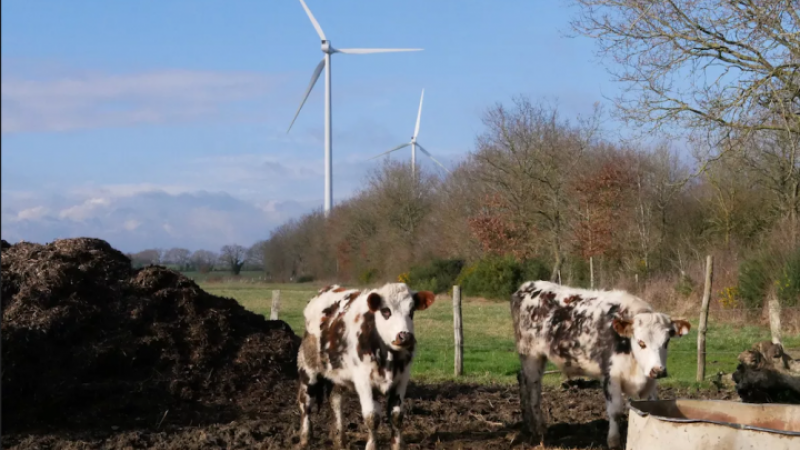 Depuis l'ouverture du parc éolien de Nozay, les vaches meurent et les humains sont malades