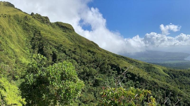 En Martinique, des solutions agricoles émergent pour éliminer le chlordécone