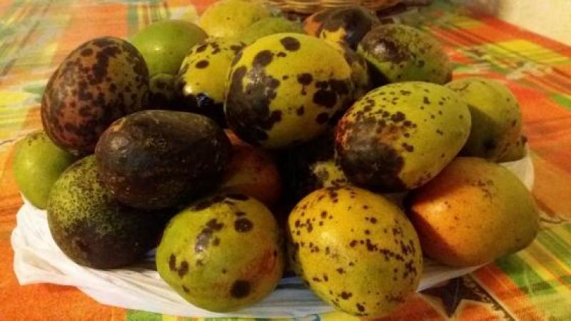 An ti lodè mango-basiyak