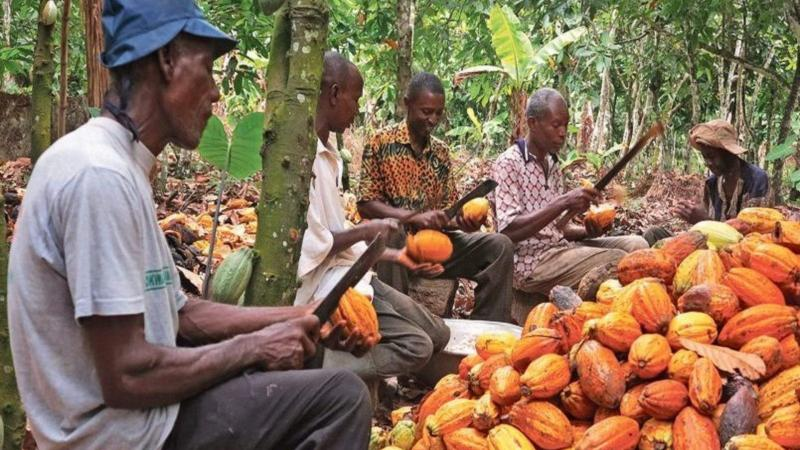 Cacao : la Côte d'Ivoire et le Ghana remportent une victoire contre Hershey
