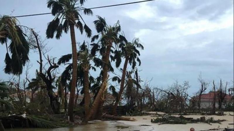 Les conséquences dévastatrices d'Irma et de Maria sur la biodiversité de Saint-Barthélemy