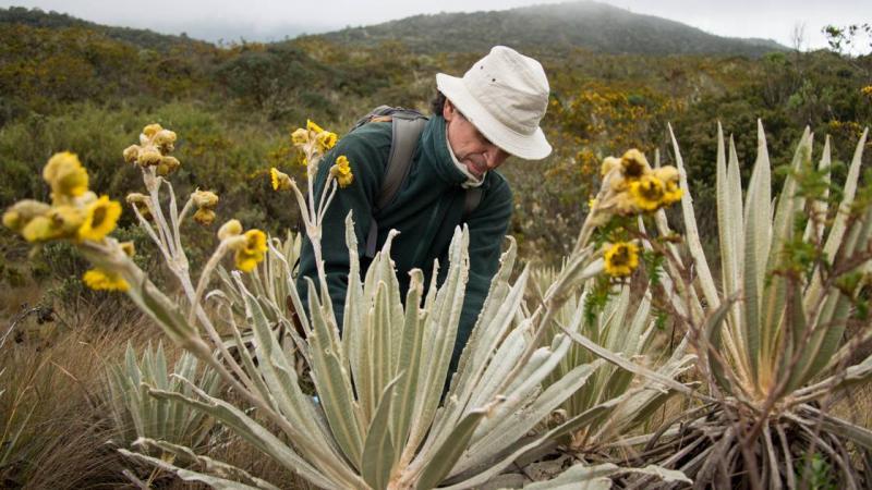 """Face à la déforestation, un botaniste sauve la """"mémoire verte"""" de la Colombie"""