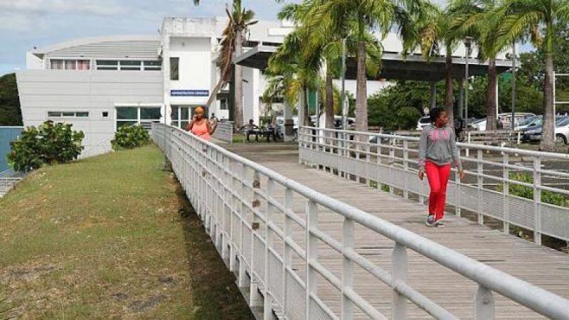 Présidence de l'Université des Antilles : ils ont donné leur langue au chat !