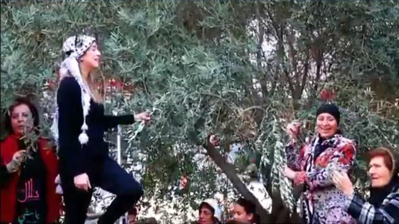 Le chant de l'olivier