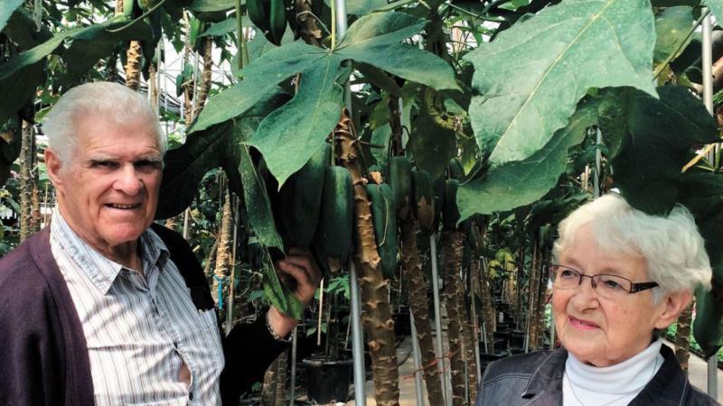 Bananes, ananas et mangues poussent dans les Laurentides