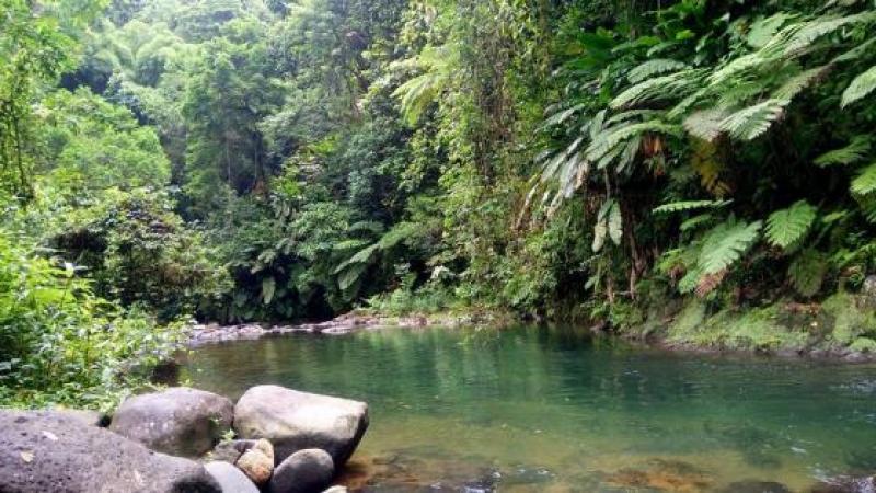 Mettre fin à l'imposture du prétendu indépendantisme en Martinique
