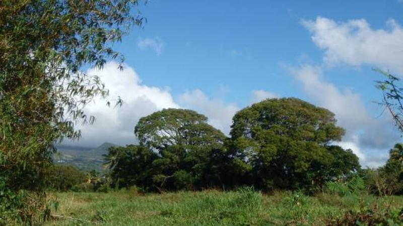 MARTINIQUE : LE SYNDROME CHILIEN