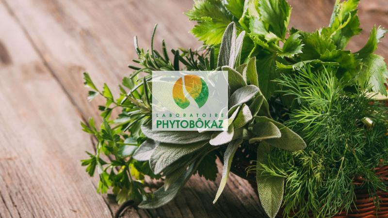 Phytobokaz, l'excellence caribéenne