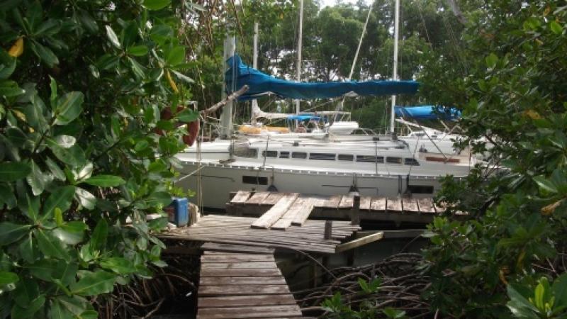 Port Cohé : 85 hectares de mangroves en passe d'être détruits par la CACEM