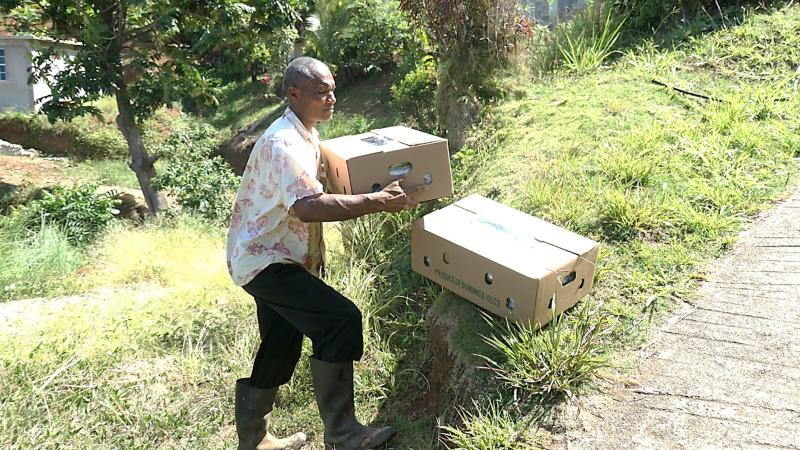 Dominica makes first export of Vetiver grass to Antigua and Barbuda under IICA-CBF EbA project