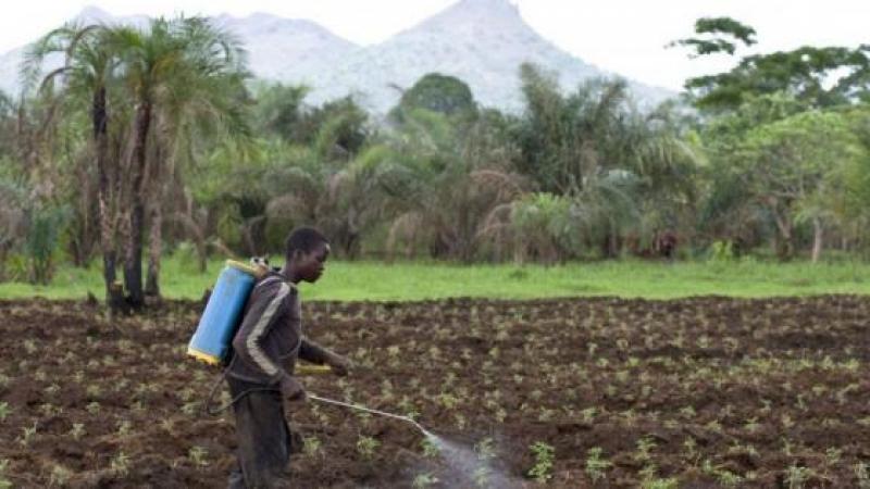 La France exporte un pesticide interdit sur son sol vers des pays en développement