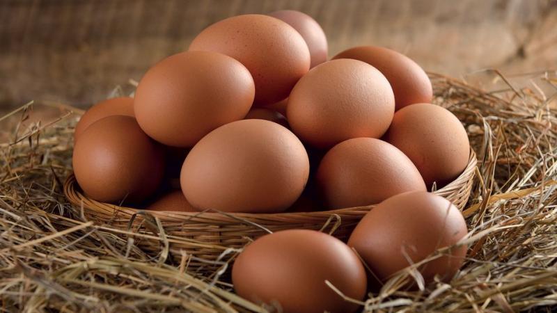 Œufs cassés sans omelette (6è partie)
